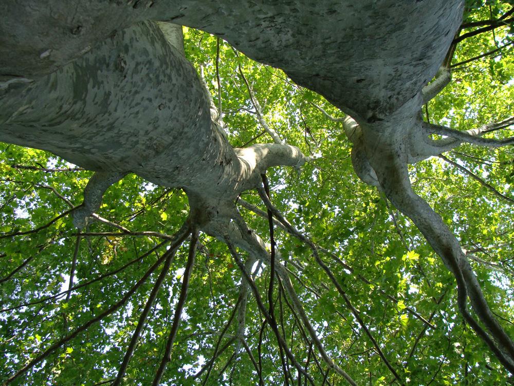 Baum als Symbol für unsere Gedankenaktivität